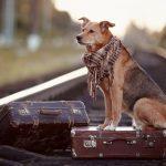 Sa calatoresti cu animalul de companie: usor si mai placut